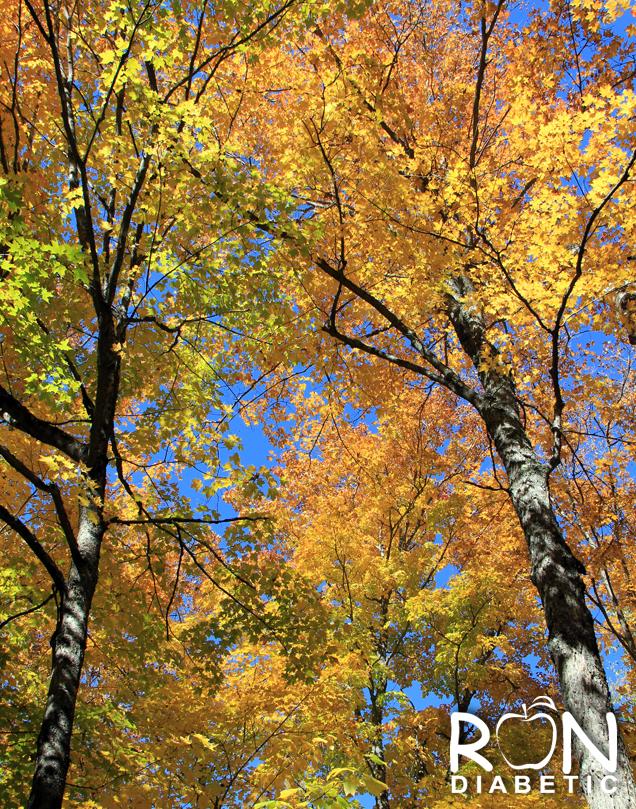Канадская-осень_8